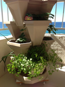Home Grown Herbs From My Balcony Pot